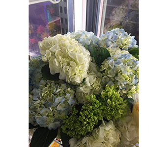 Heavenly Hydrangea in Cary NC, Cary Florist