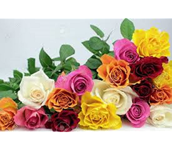 Rainbow of Roses in Cary NC, Cary Florist