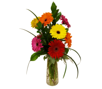 Simply Gerbera Daisies by Country Greenery in Moorhead MN, Country Greenery
