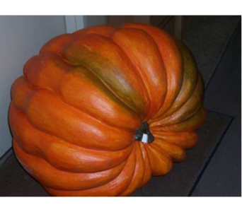 GIANT 30 inch latex pumpkin  in Bellevue WA, CITY FLOWERS, INC.