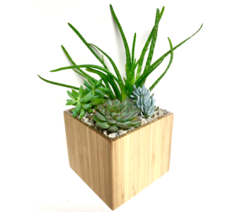 Succulent Garden in 6x6 Bamboo Cube in Wyoming MI, Wyoming Stuyvesant Floral