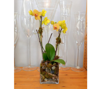 Modern Orchid Cubed in Oakville ON, Margo's Flowers & Gift Shoppe