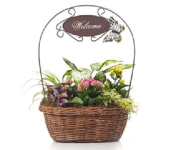 Welcome Assortment Planter in Maple Valley WA, Maple Valley Buds and Blooms