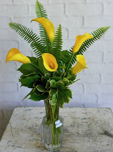 Friendship, Yellow Callas in Arlington Heights IL, Sylvia's - Amlings Flowers