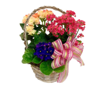 Blooming Garden in Stuart FL, Harbour Bay Florist