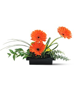 Teleflora's Zen Gerbera Bowl in Orange CA, LaBelle Orange Blossom Florist