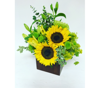 Sunflowers in 6x6 Bamboo Cube - All-Around in Wyoming MI, Wyoming Stuyvesant Floral