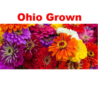 Ohio Grown Zinnias in Columbus OH, OSUFLOWERS .COM