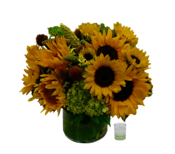 Sunny Sunflowers in Santa Monica CA, Edelweiss Flower Boutique
