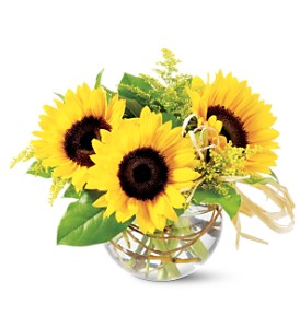 Teleflora's Sassy Sunflowers in Claremore OK, Floral Creations