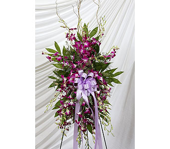 Funeral Spray Dendrobium Orchids in Southampton PA, Domenic Graziano Flowers