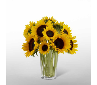 The FTD� Golden Sunflower  in Norfolk VA, The Sunflower Florist