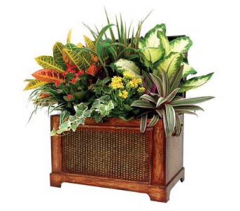 Lincoln Chest in Detroit and St. Clair Shores MI, Conner Park Florist