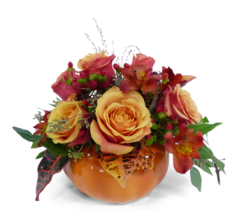 Pumpkin Delight in Silver Spring MD, Bell Flowers, Inc