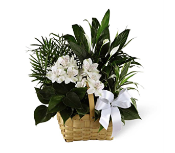 The FTD� Peace & Serenity� Dishgarden in Elk Grove Village IL, Berthold's Floral, Gift & Garden