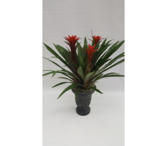 Triple Bromeliad in a Ceramic Container in Houston TX, Athas Florist