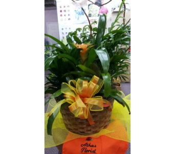 Small Dishgarden basket in Houston TX, Athas Florist
