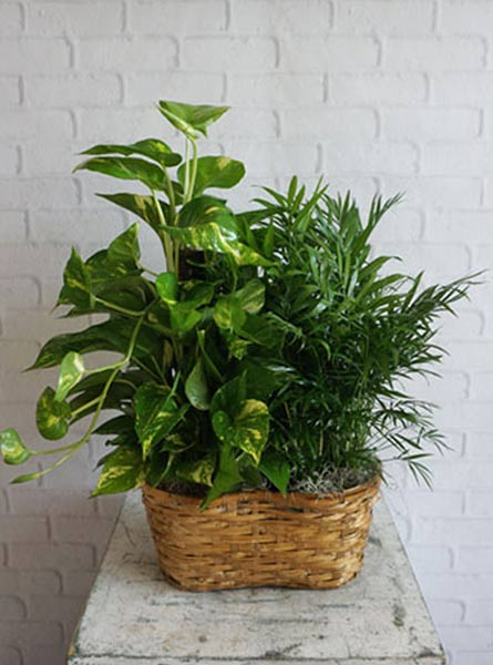Double Plant Basket in Smithtown NY, James Cress Florist