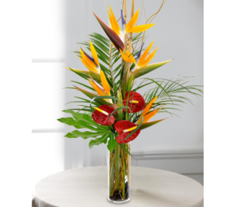 Year of Tropicals for 3 Months in Fairfax VA, Exotica Florist, Inc.