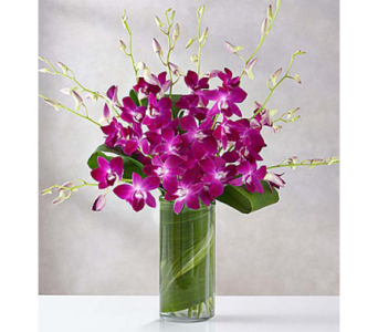 Monthly Orchids for Three Months in Fairfax VA, Exotica Florist, Inc.