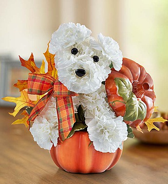 A-DOGABLE FOR FALL in Jupiter FL, Anna Flowers
