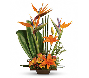 Teleflora's Exotic Grace DX in Watertown CT, Agnew Florist