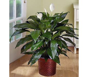 Custom Plant in Needham MA, Needham Florist
