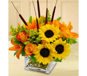 Sunflower & Lily Fun in Baltimore MD, Raimondi's Flowers & Fruit Baskets