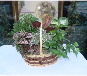 Table Top Basket Garden in Princeton, Plainsboro, & Trenton NJ, Monday Morning Flower and Balloon Co.