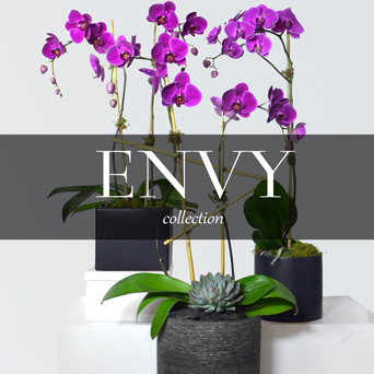 Envy Orchid Collection in Dallas TX, Dr Delphinium Designs & Events