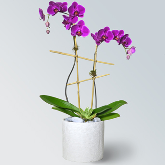 Jewel Orchid Collection - Luxury Design in Dallas TX, Dr Delphinium Designs & Events