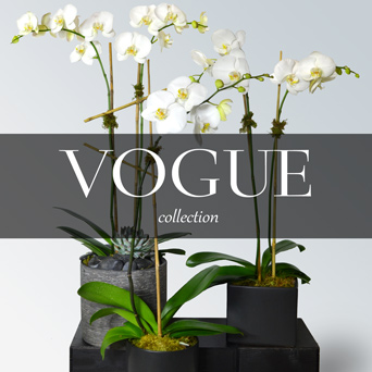 Vogue Orchid Collection in Dallas TX, Dr Delphinium Designs & Events