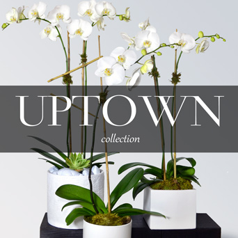 Uptown Orchid Collection in Dallas TX, Dr Delphinium Designs & Events