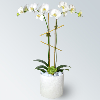 Uptown Orchid Collection - Luxury Design in Dallas TX, Dr Delphinium Designs & Events