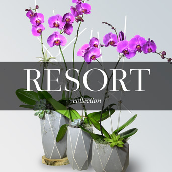 Resort Orchid Collection in Dallas TX, Dr Delphinium Designs & Events