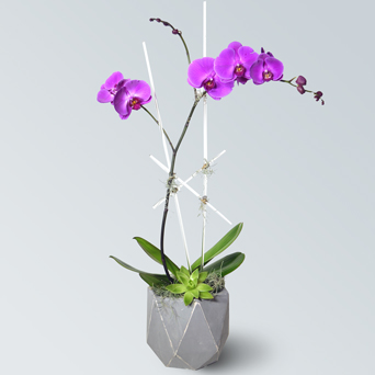 Resort Orchid Collection - Single in Dallas TX, Dr Delphinium Designs & Events