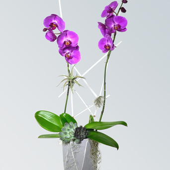 Resort Orchid Collection - Luxury Design in Dallas TX, Dr Delphinium Designs & Events