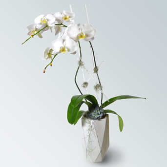 Loft Orchid Collection - Double in Dallas TX, Dr Delphinium Designs & Events