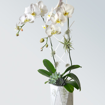 Loft Orchid Collection - Luxury Design in Dallas TX, Dr Delphinium Designs & Events