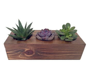 Wooden Succulent Trio in Detroit and St. Clair Shores MI, Conner Park Florist