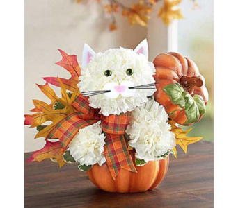 Fabulous Feline for Fall in Fairfax VA, Exotica Florist, Inc.