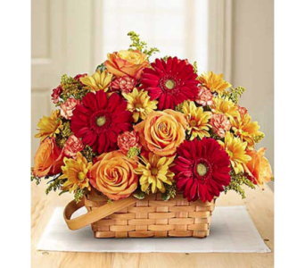 Warm Welcome in Fairfax VA, Exotica Florist, Inc.