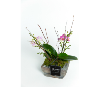 Mini Orchid Planter in Dunwoody GA, Blooms of Dunwoody