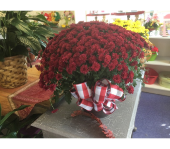 Fall Mum in Statesville NC, Brookdale Florist, LLC