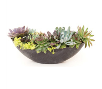 Large Oval Slate Planter in Norristown PA, Plaza Flowers