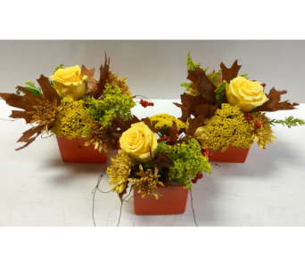 Cute Fall Arrangements In Ceramic Cubes  in Northfield MN, Forget-Me-Not Florist