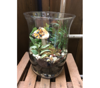 Terrarium with butterfly in Ashburn VA, Lavender Fields