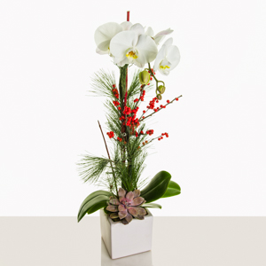 Orchid Waltz in New York NY, Starbright Floral Design