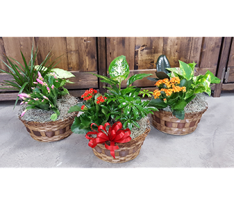 Small Garden Basket in Frisco TX, Patti Ann's Flowers
