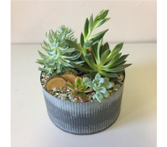 Galvanized Succulent in Walla Walla WA, Holly's Flower Boutique